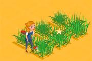 مزرعه القمح
